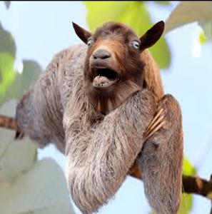 SlothGoat